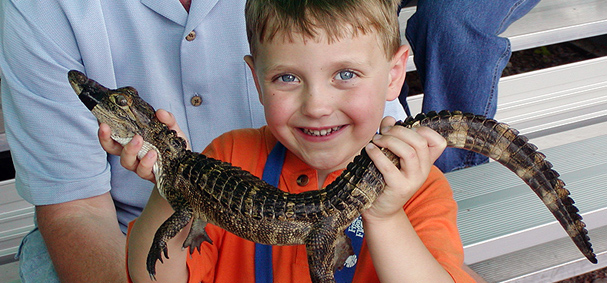 A boy takes a photo with a baby alligator at Everglades Alligator Farm.