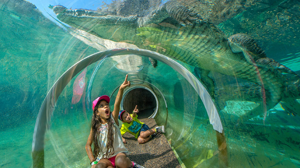 A girl points to an alligator right above her in the Croc Tube at Zoo Miami.