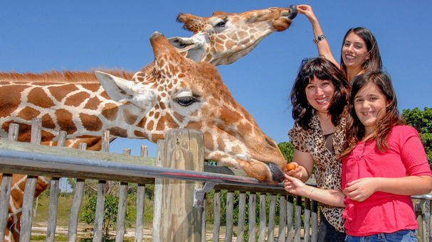 Take the time and feed the giraffes for a unique family experience at Zoo Miami.