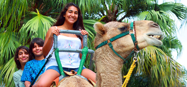 Camel rides are a fun thing to do at Zoo Miami.