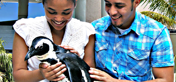 Get happy with your close and personal experience with a penguin at Jungle Island.